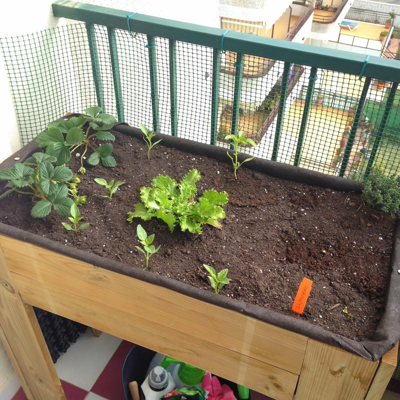 La mesa de cultivo tomates urbanitas - Drenaje mesa de cultivo ...
