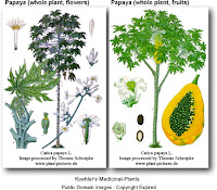 Papaya-medicinal-plants