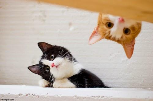 Image chat rigolo photo de chat - Photo de chaton rigolo ...