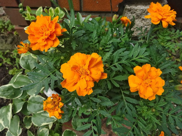 花,鉢植え〈著作権フリー無料画像〉Free Stock Photos