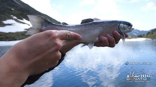 Fly fishing salvelinus Pyrenees