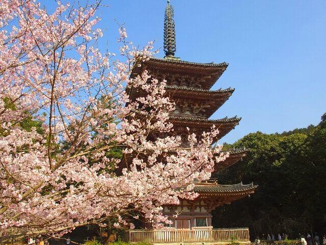 桜と五重塔。
