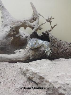 Reptile qui sort d'une pierre à Touroparc