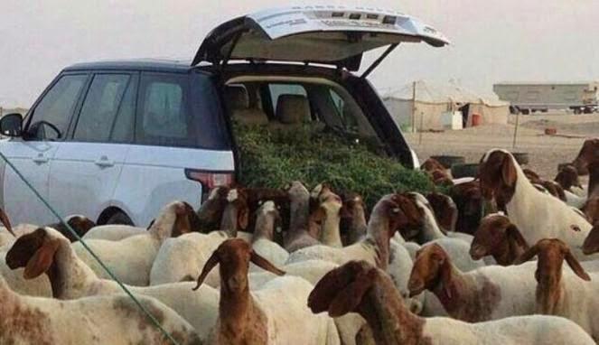 [VIDEO] RANGE ROVER ANGKUT RUMPUT Range Rover SUV Terbaru Dipakai Angkut Rumput di Arab