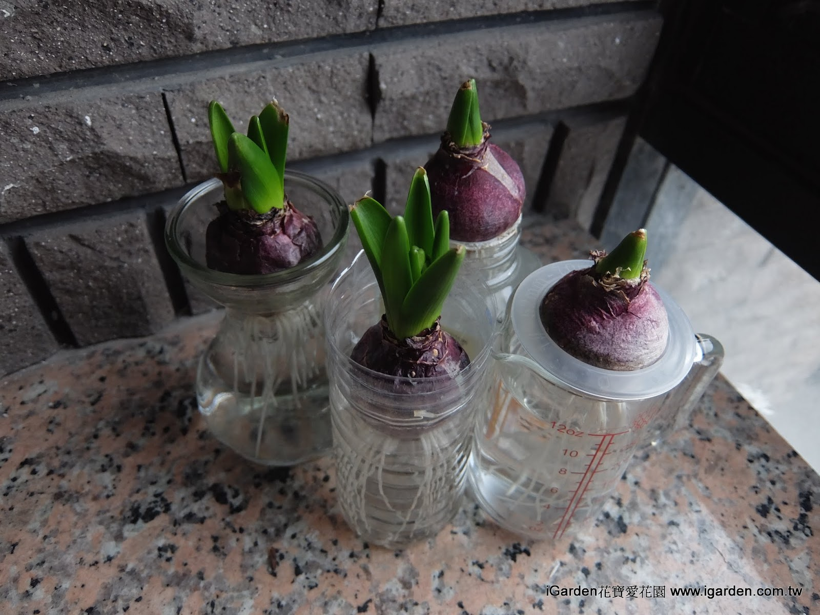 耕 球根 栽培 水