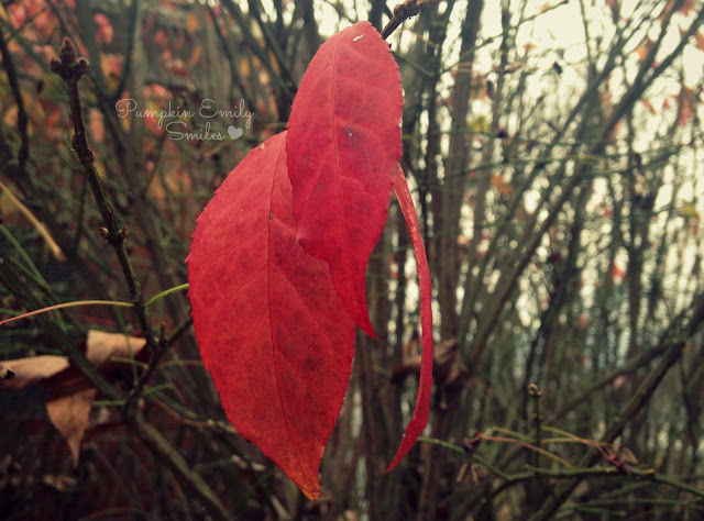 Red leaves from a burning bush