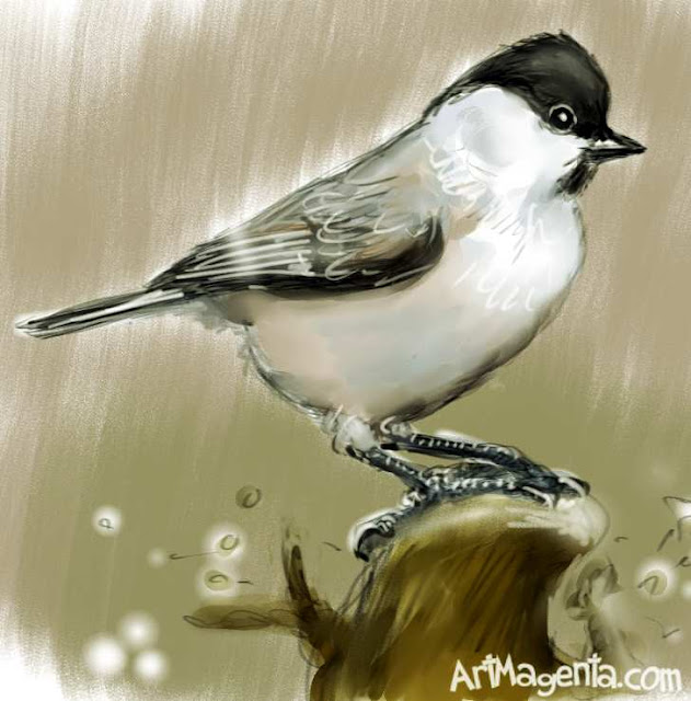 Marsh Tit is a bird drawing by ArtMagenta