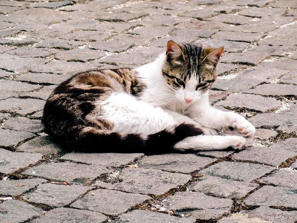 cat, Sintra - portugal - www.hellolaroux.com