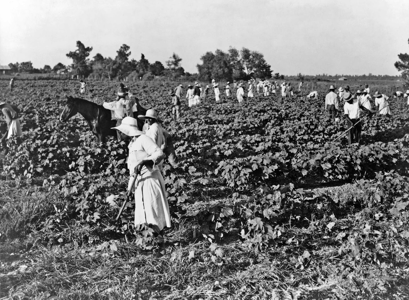 History in Photos: October 2012  Cotton Plantations 1800s