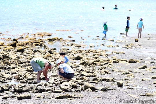 Looking for treasure amongst the rocks seen at low tide at Sandy Beach, Breakwater Rd, Napier in the hot sunny weather. photograph