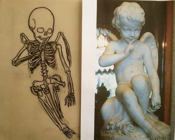 anatomia de cupido