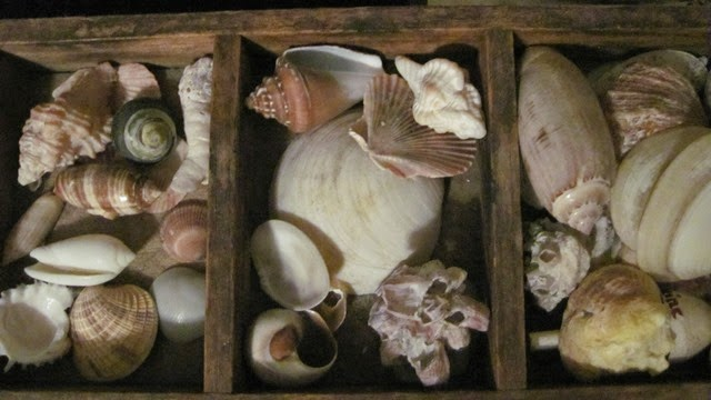 Collected Shells