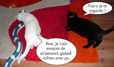 Duo de chats noir et blanc.