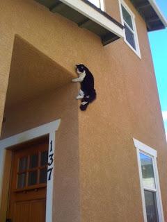 ninja cat, ninjacat, ninja, cat, lolcats, lolcat ninja, lolcats ninja, ninja kitty