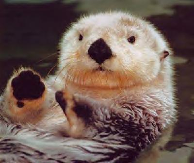 otter single guys Otter's best 100% free dating site meeting nice single men in otter can seem hopeless at times — but it doesn't have to be mingle2's otter personals are full of single guys in otter looking for girlfriends and dates.