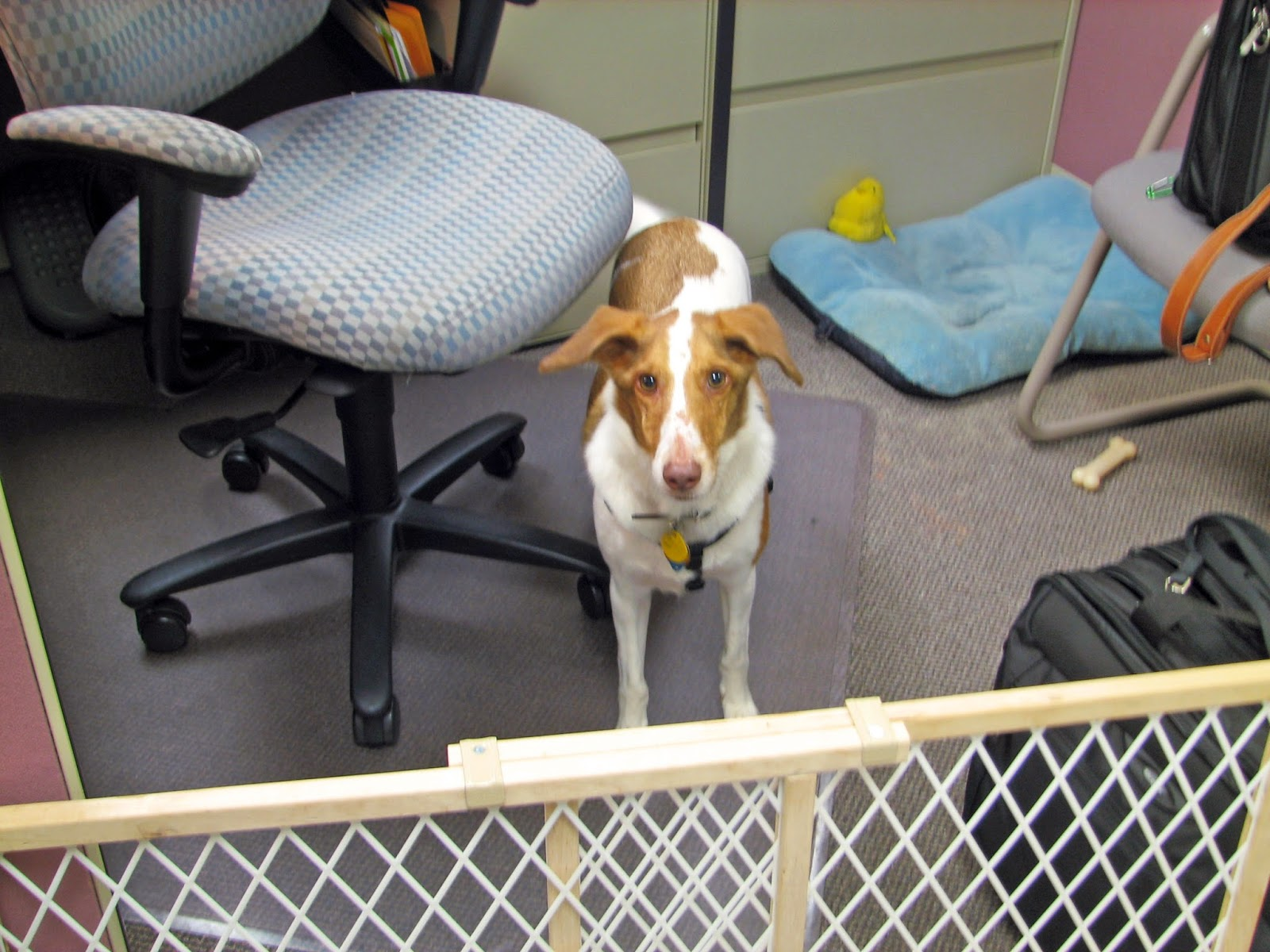 dog in office