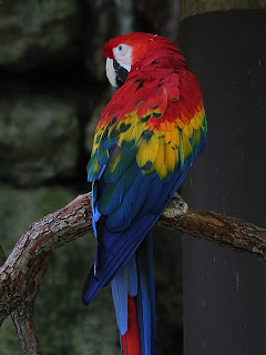 Macaw Duplicate; Mode Multiply; Opacity 50%