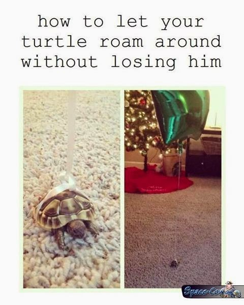 funny things turtle picture