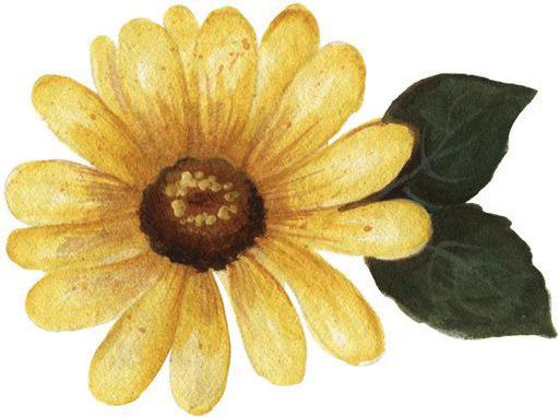 Dibujo de margarita