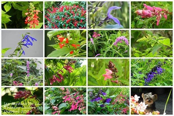 Ouverture week end du 4 5 octobre les jardins for Jardin ouvert ce week end