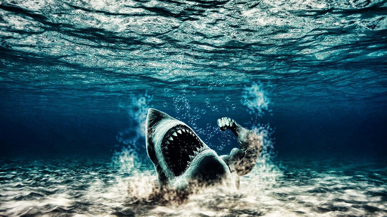 http://1.bp.blogspot.com/-9QXi6GlLEgY/Tw12DZT5QgI/AAAAAAAAWvQ/crLaMqSPYGc/s1600/Haai-achtergronden-dieren-hd-haaien-wallpapers-foto-19.jpg