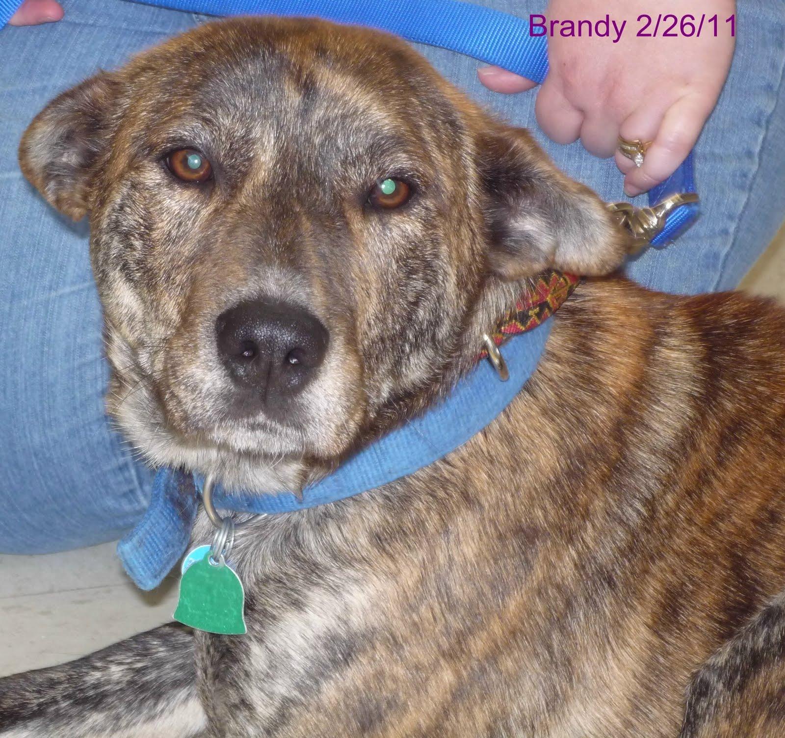 Heinz  Dog Rescue