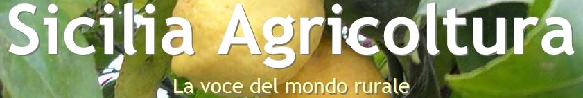 http://www.siciliaagricoltura.it/2014/11/19/giornata-nazionale-dellalbero/
