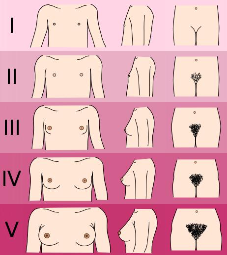 Desarrollo de senos con hormonas feminizantes
