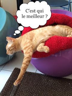 Chat qui dort dans le vide.