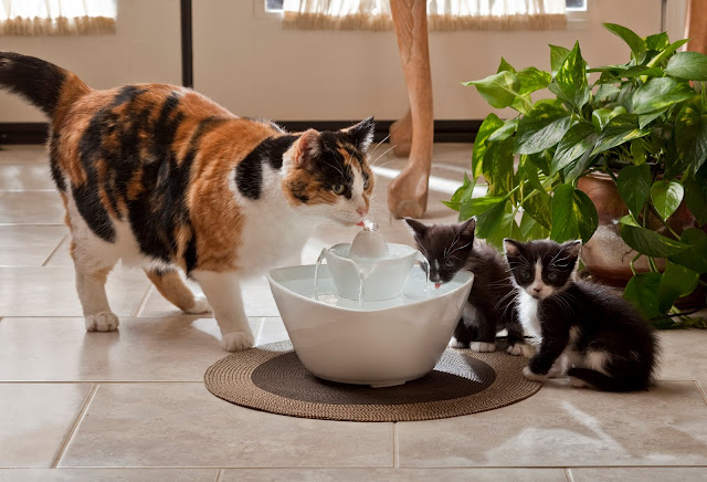 good-water-fountains-for-cats-1-pet-water-fountains-cat-1800-x-1227 ...