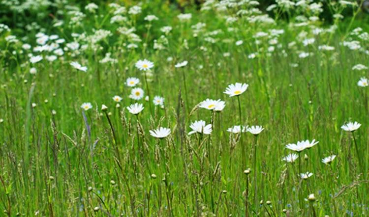 Områder der vokser vildt med græs, vilde blomster og summende dyreliv