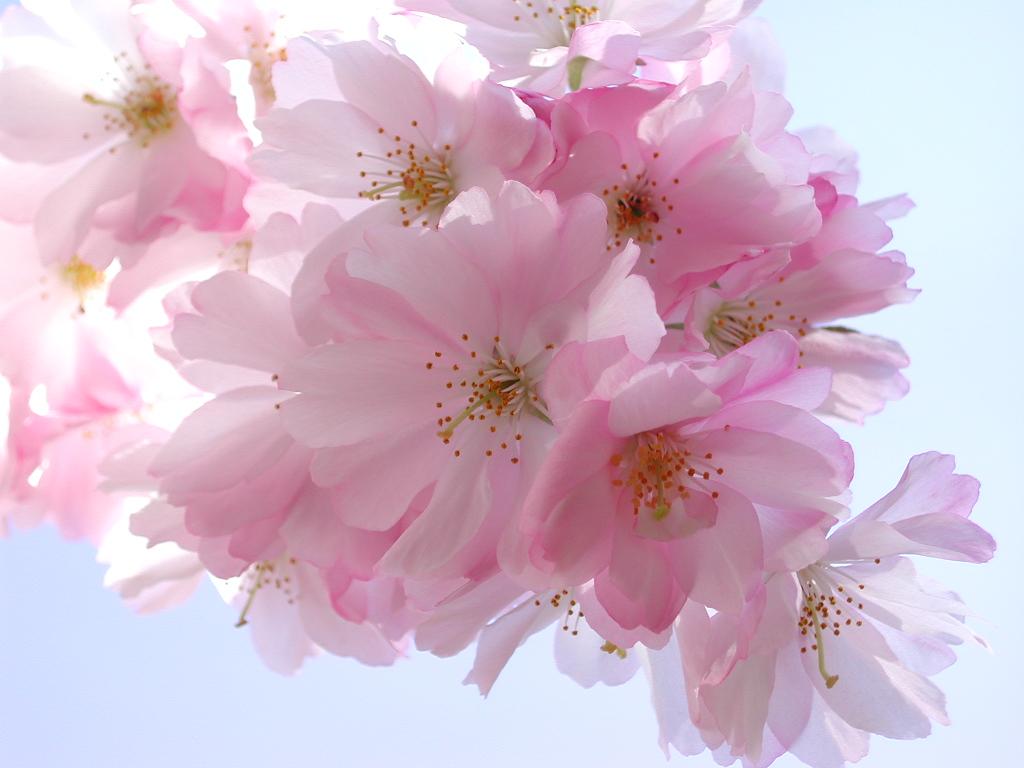 http://1.bp.blogspot.com/-9Re98AK9HCg/TZM098zKu2I/AAAAAAAAAFE/WjenmtA7vwc/s1600/scent-wisp-wallpapers_5138_1024x768.jpg