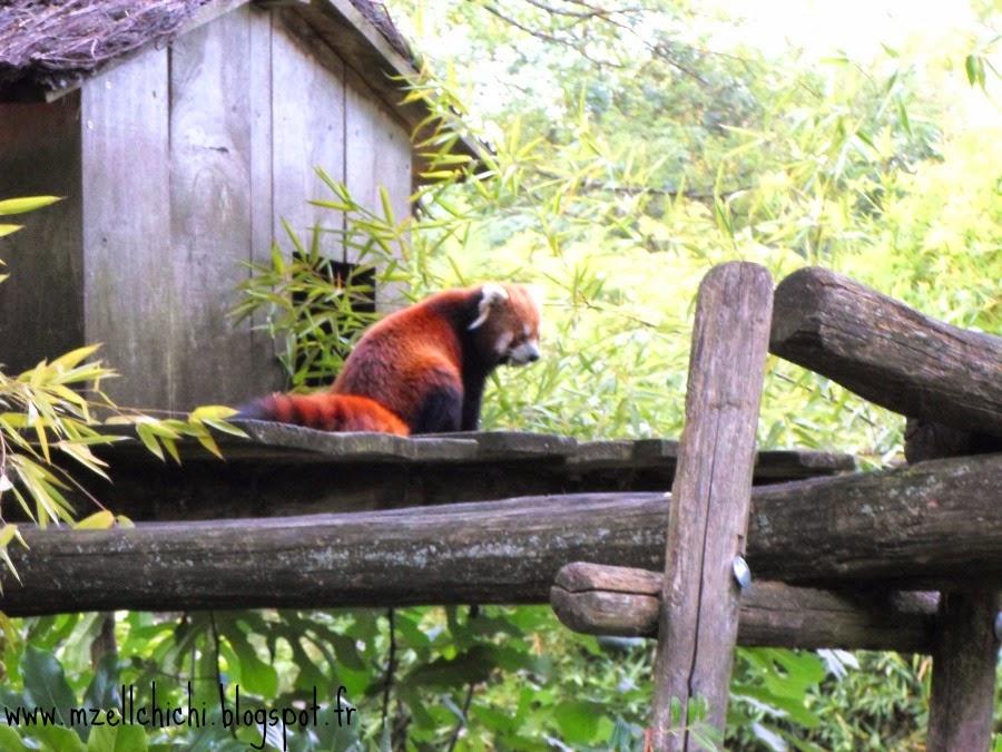 Zoo-Pessac-Panda-Roux-Cabane