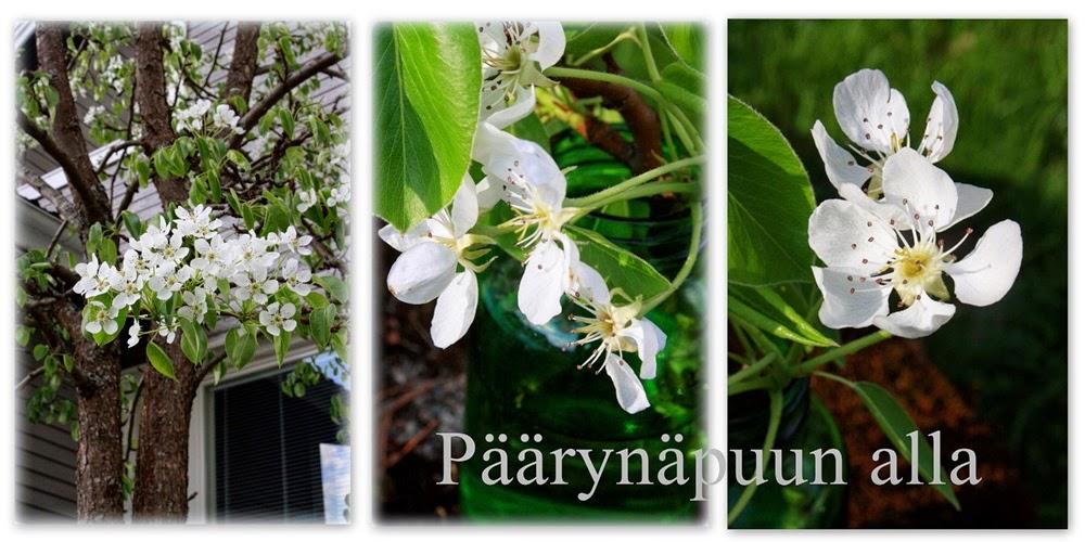 Päärynäpuun Alla