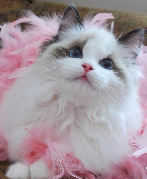 beauty of life beauty of cats