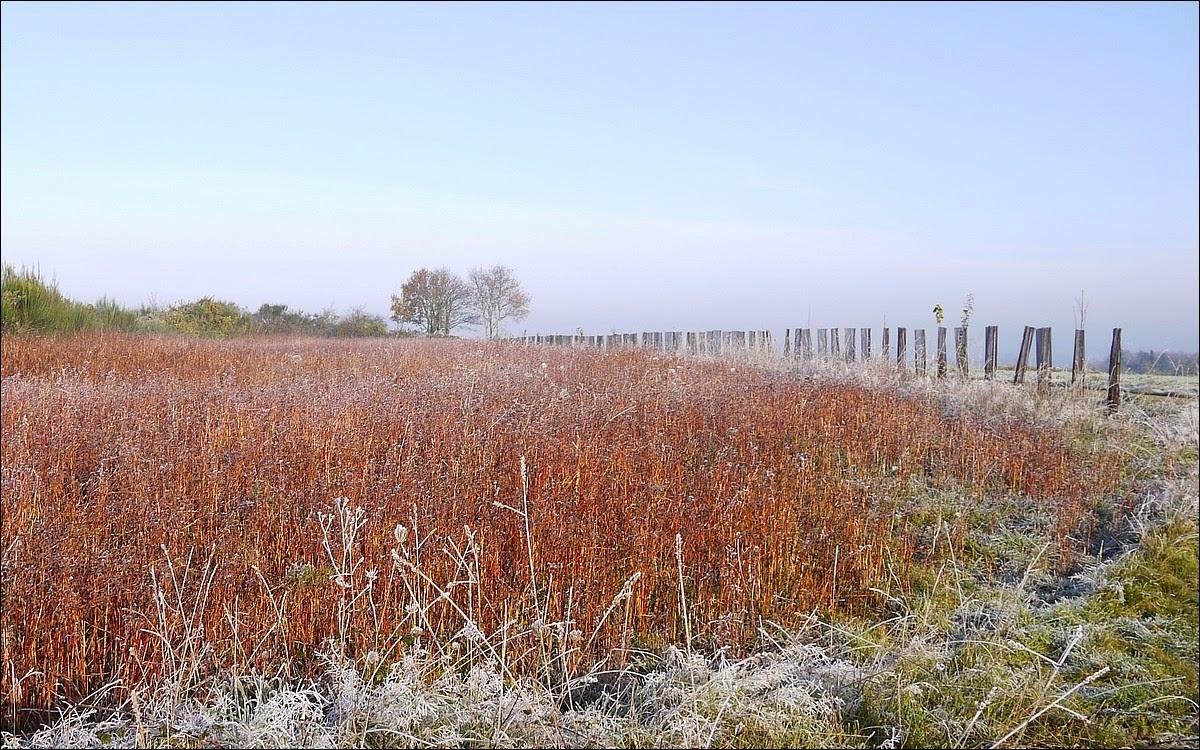 Dans les  landes de Cojoux , on plantte du sarrasin pour nourrir les oiseaux