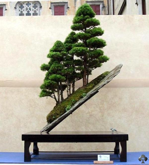 Hobby hobby bonsai as a hobby for Unique bonsai trees