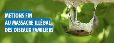 https://www.lpo.fr/actualite-juridique/mettons-fin-au-massacre-illegal-des-oiseaux-familiers