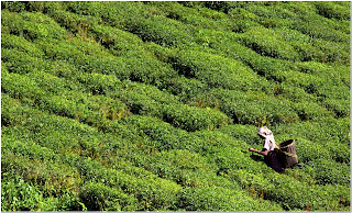 Darjeeling Photos
