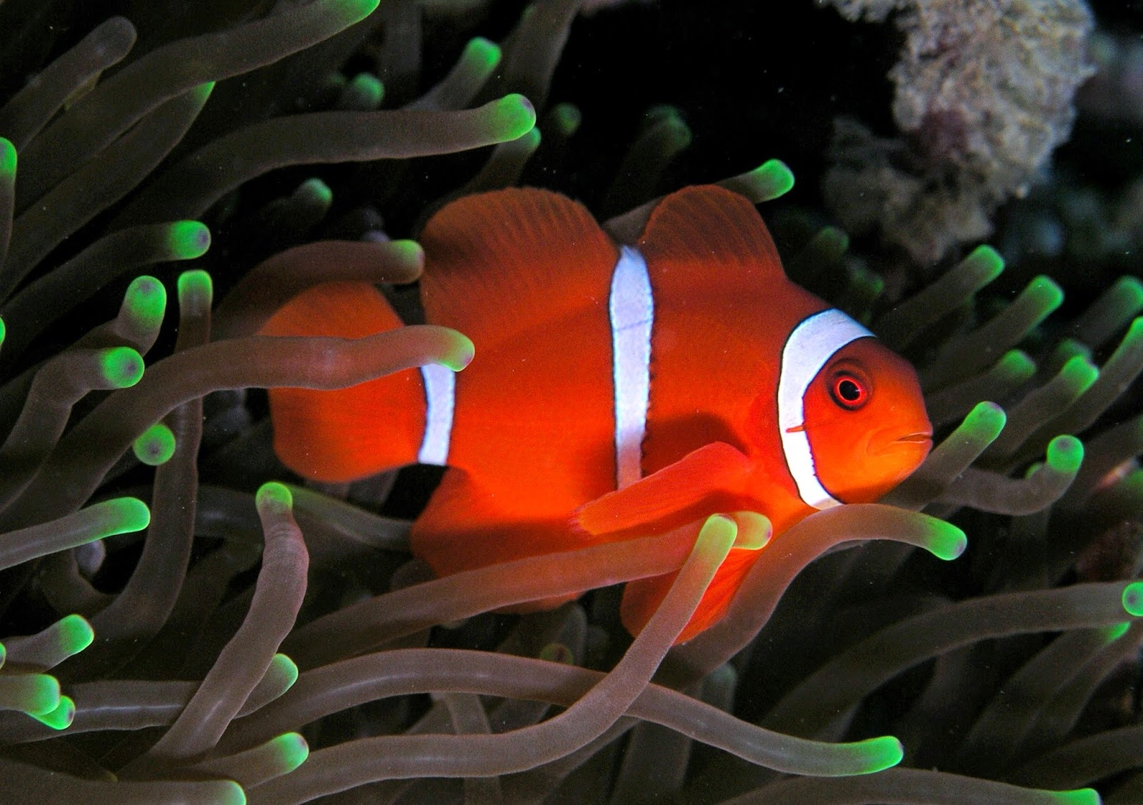 Blok888: Top 10 Most Beautiful Saltwater Fishes in the world