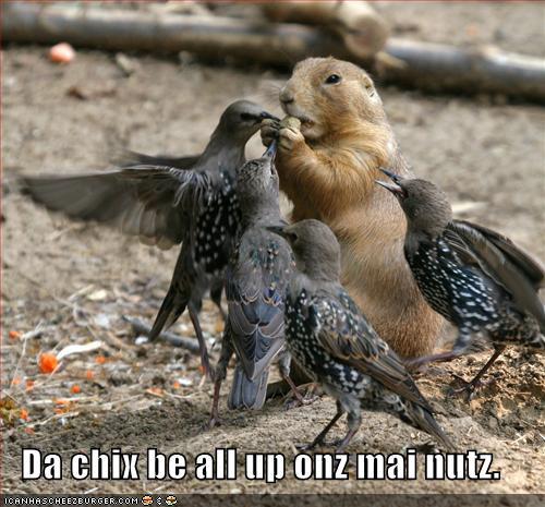 Funny birds funny animal - Funny bird pics ...