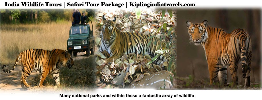 India Wildlife Tours | Wildlife Safari Tour | India Tours