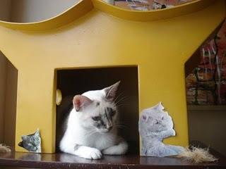 Gata Lili descansa na porta da casinha para gatos