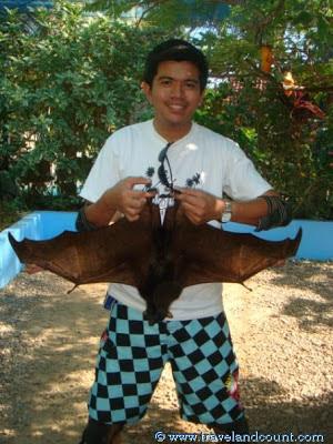Boracay Bat Sanctuary