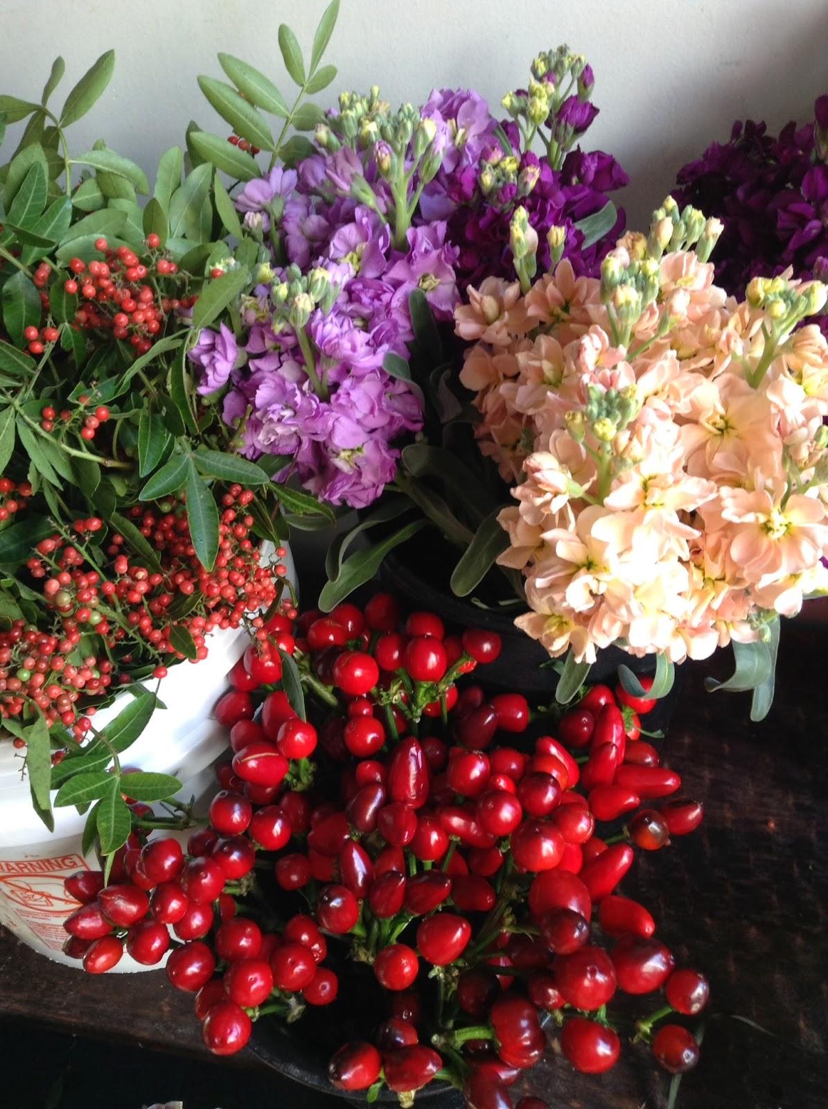 November flowers and fun stuff!   Juniper Flowers