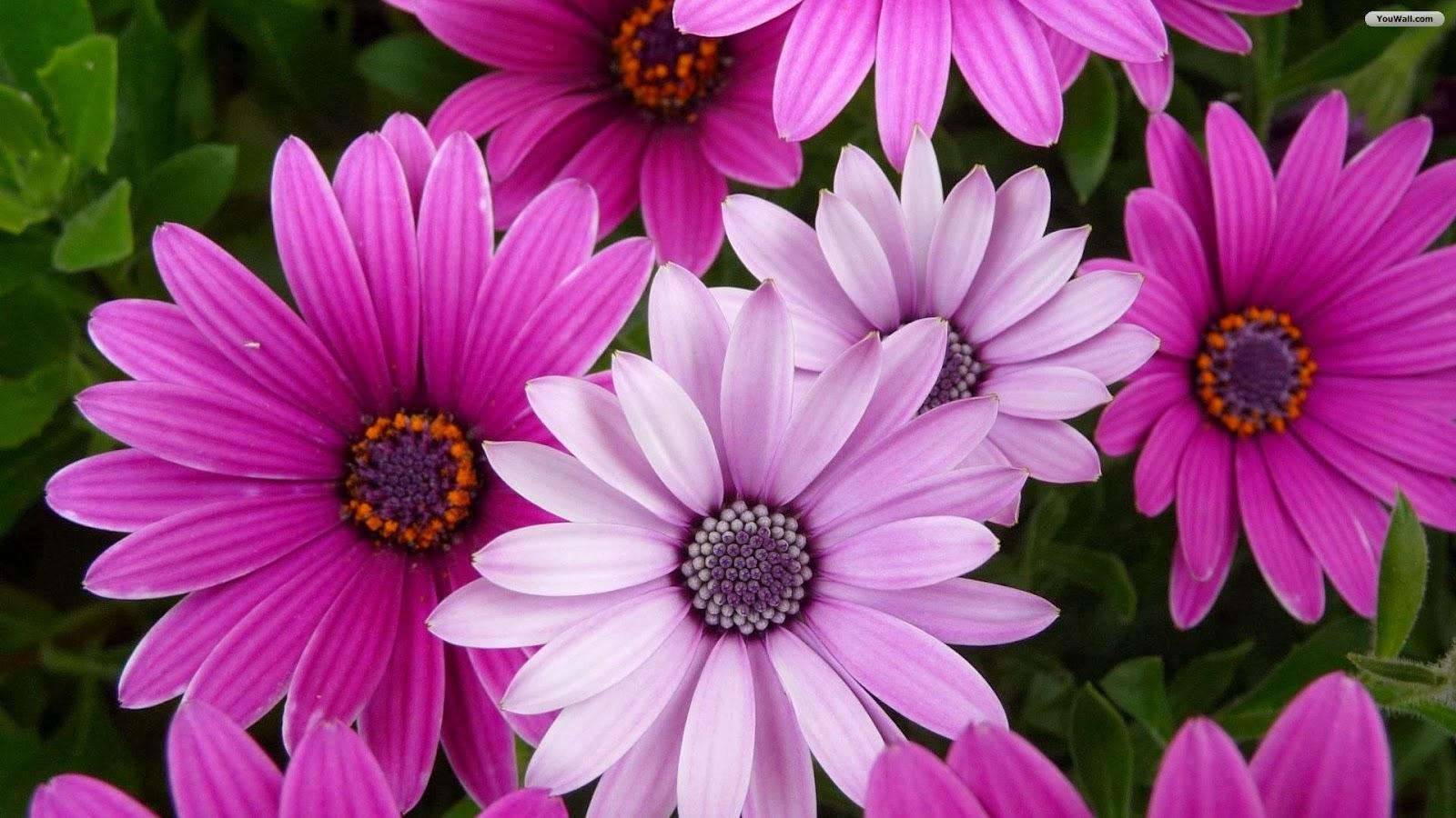 Beautiful Purple White Flowers Hd Wallpapers