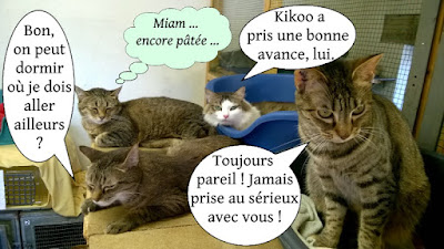 Chamaillerie entre chats !
