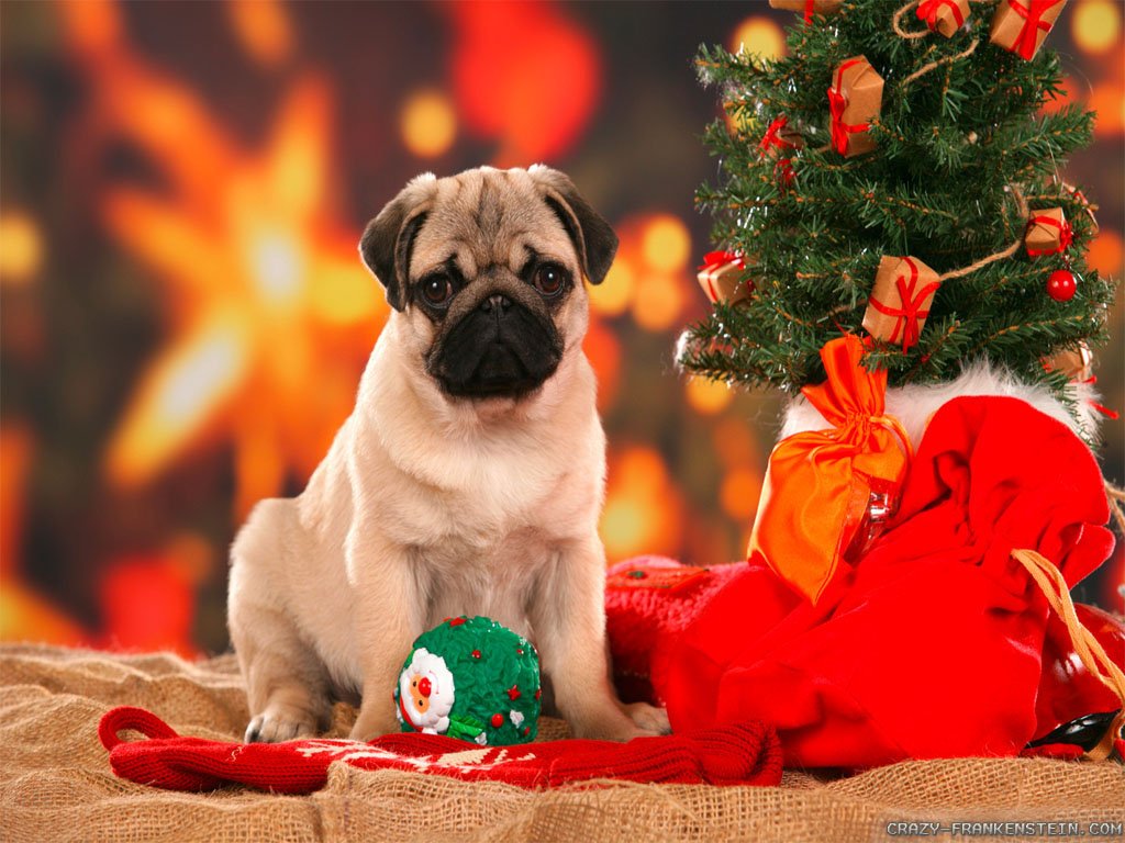 cute christmas dogs amazing wallpapers