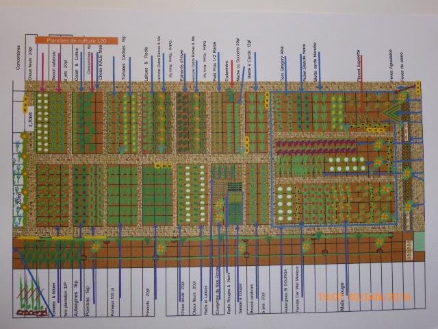 Connu POTAGER du Centre ville: Plan d'organisation du potager PS71