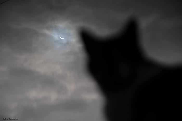 [Ftvh] Một chú mèo đang quan sát hiện tượng Nhật thực toàn phần. Tác giả : Cetra Coverdale.